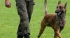 Militärhund / Foto: Bundesheer/GREBIEN