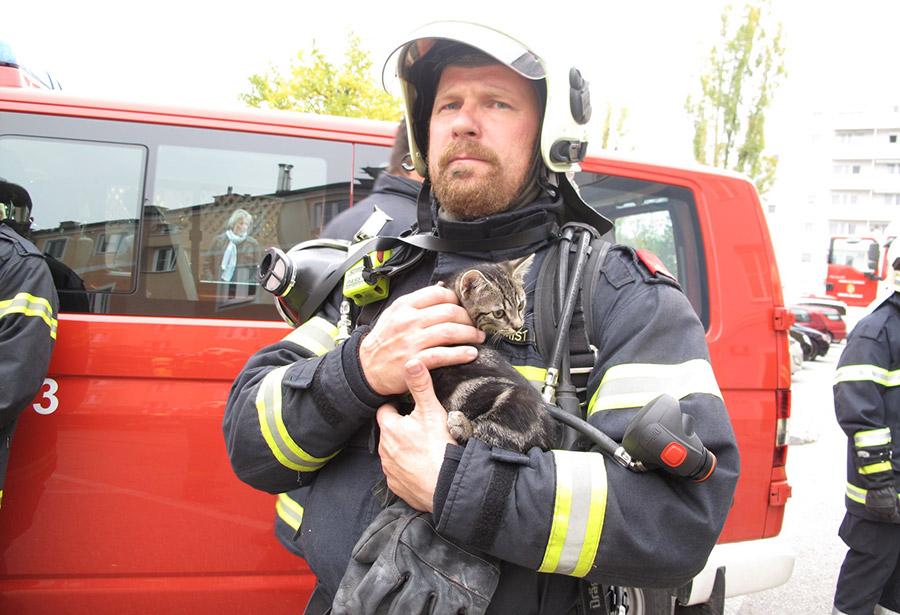 Gerettete Katze / Foto: Presseteam Feuerwehr Wiener Neustadt
