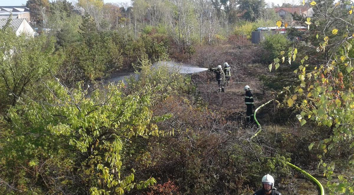 Flurbrand im Stadtgebiet / Foto: Presseteam der Feuerwehr Wiener Neustadt