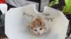 Katze befreit / Foto: Presseteam d. FF Wr. Neustadt