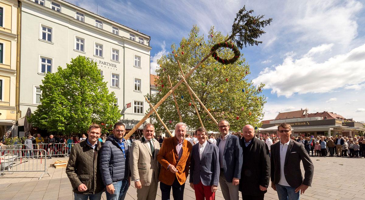 Maibaum-Aufstellen / Foto: Stadt Wiener Neustadt/Weller