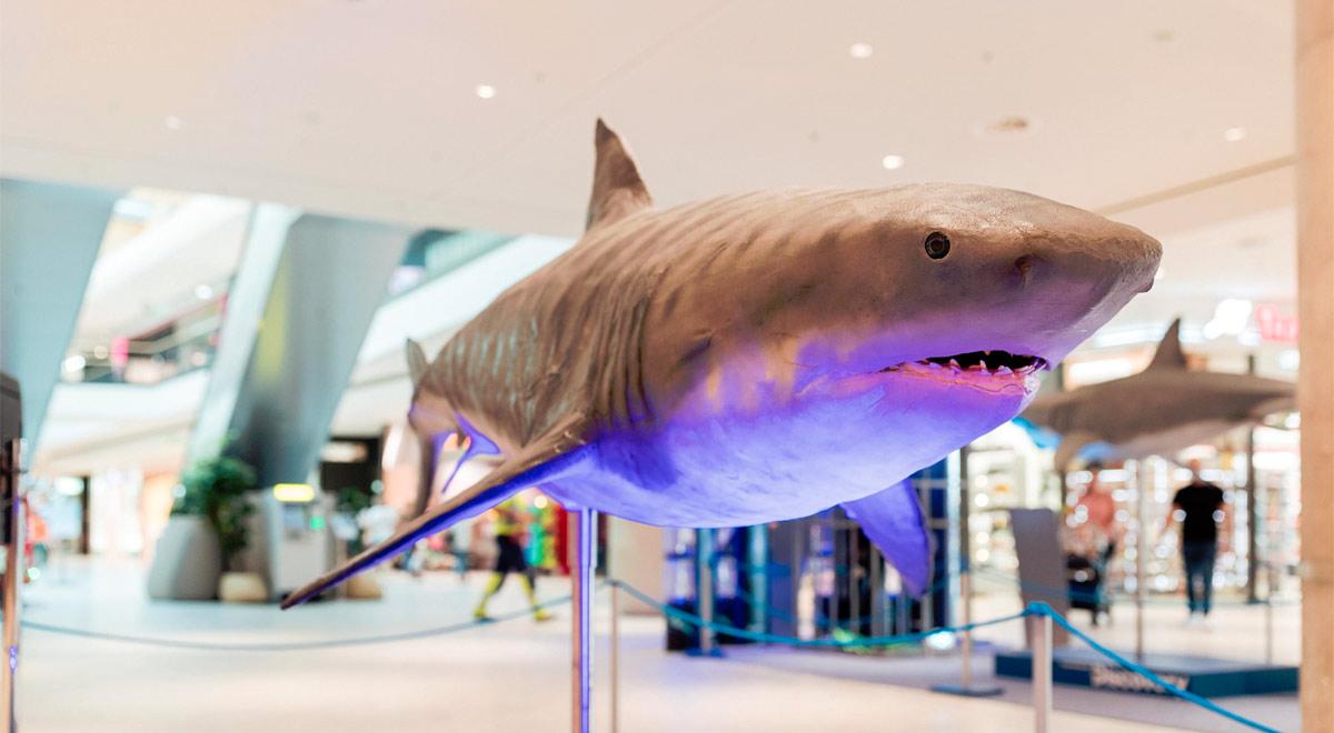 Der Weiße Hai / Foto: © DerFritz