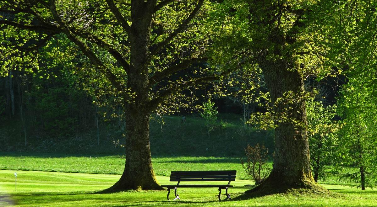 Bäume im Park / ©  Rainer Sturm / pixelio.de
