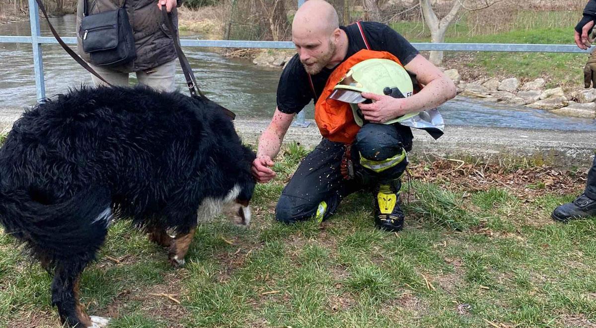 Person und Hund in Kehrbach gestürzt / Foto: Presseteam d. FF Wr. Neustadt
