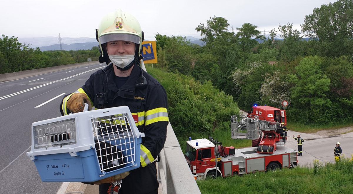 Tierrettung von der Schnellstraße / Foto: Presseteam d. FF Wr. Neustadt