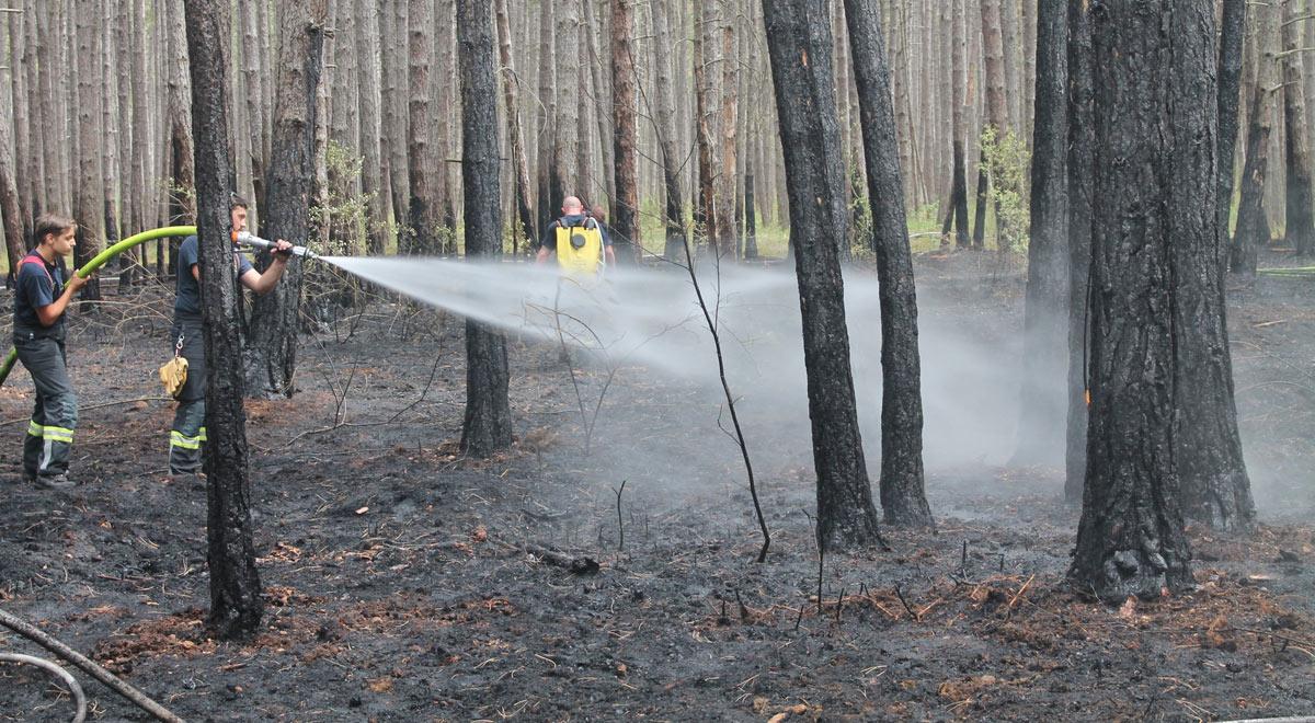 Waldbrand im Föhrenwald / Foto: Presseteam d. FF Wr. Neustadt