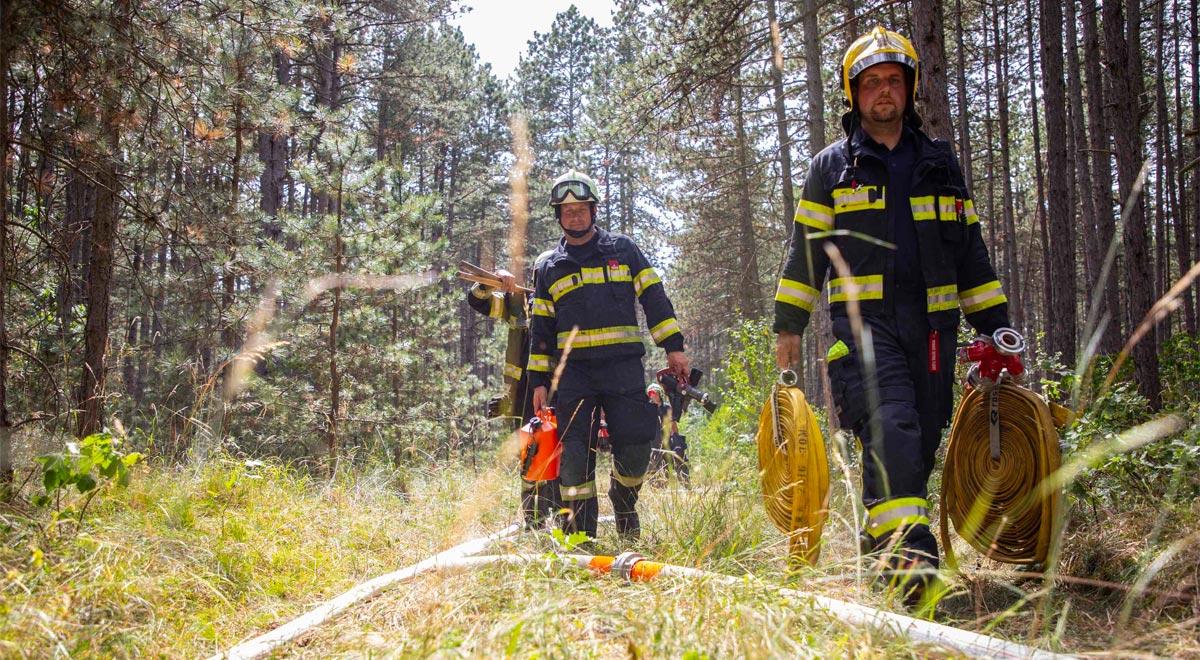 Häufung von Wald- und Flurbränden im Stadtgebiet / Foto: Presseteam der FF Wr. Neustadt